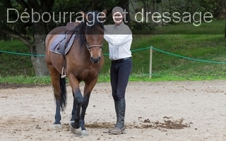 Ecole equitation d�bourrage dressage